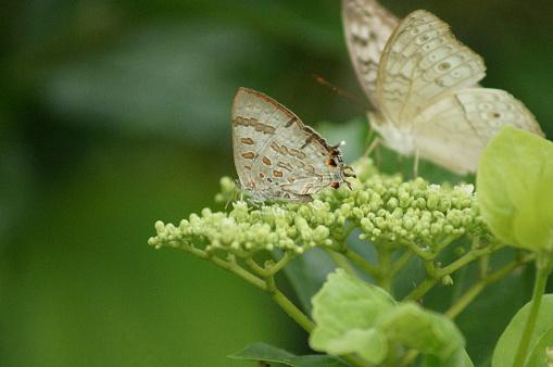 Butterflies of Malabar southern india
