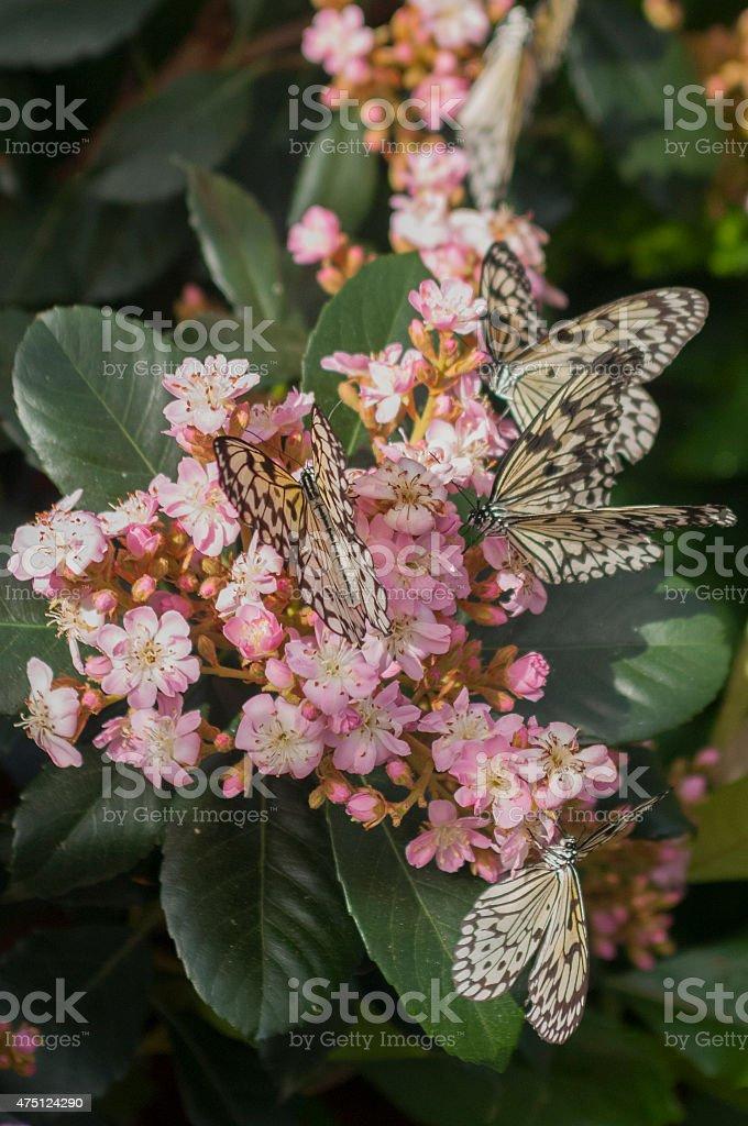Butterflies on a flower stock photo