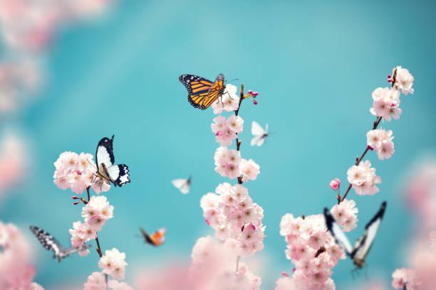 Butterflies on blooming tree picture id1206854774?b=1&k=6&m=1206854774&s=612x612&w=0&h=se3 4 dt ug2xrz gvt3gxfr7gidmrmwb6muetafs1g=