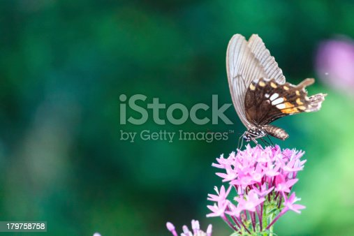 Butterflies on Flower