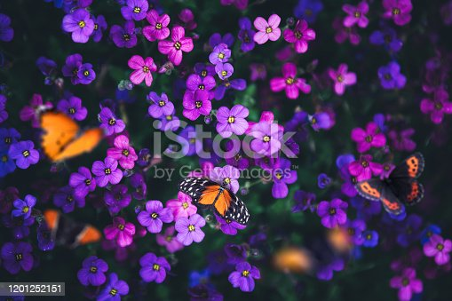 Flowerbed with butterflies. View from above.