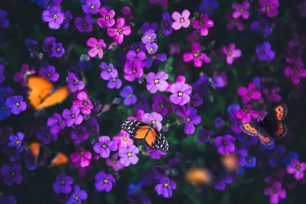 Butterflies on flowers picture id1201252151?b=1&k=6&m=1201252151&s=612x612&w=0&h=sc e8q4x7gpqlzyb8fvje7x8jaewvqeuryfxw3rwi5i=