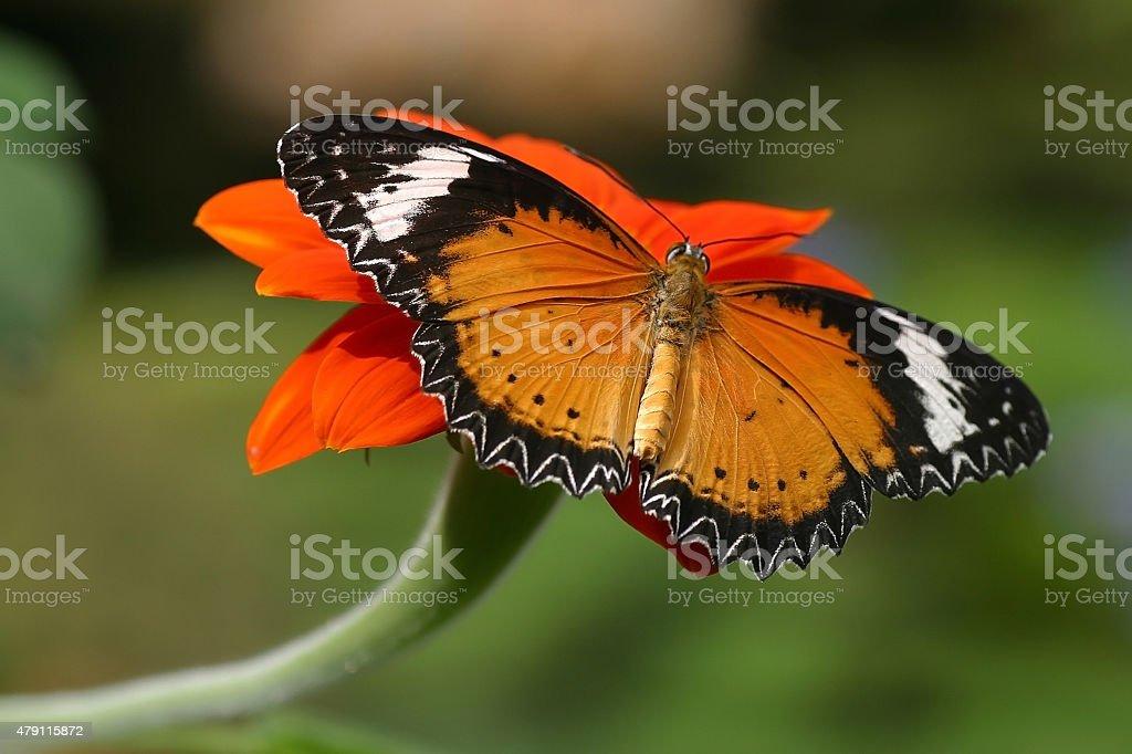 Butterflies on flowers stock photo