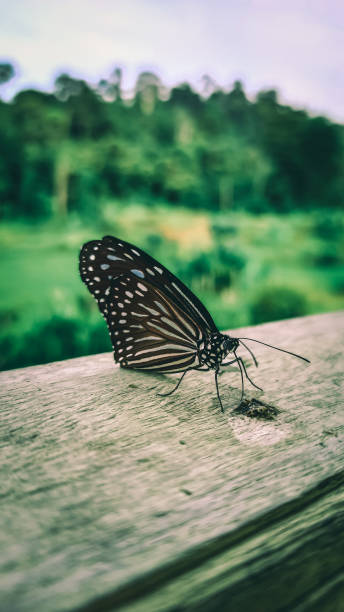 Butterflies on the fence picture id1286867718?b=1&k=6&m=1286867718&s=612x612&w=0&h=c5pse6p jbgt1 wipqmqvwxpe jmqc4s8axiwmg56b0=