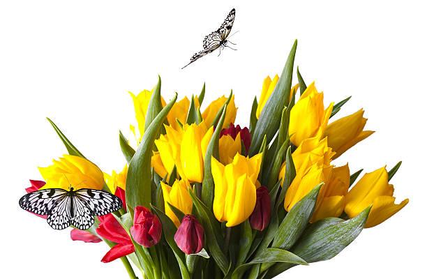 Butterflies on the tulips picture id184100738?b=1&k=6&m=184100738&s=612x612&w=0&h=ciuaxlqvrpl7ozmfayoawp55icrvcxrthji351z5rzu=