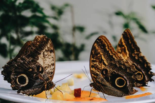 Mariposas - foto de stock