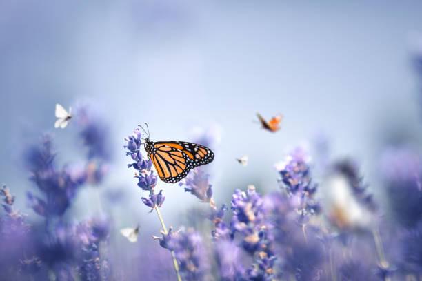 Butterflies picture id1201252148?b=1&k=6&m=1201252148&s=612x612&w=0&h=ao5btnuab7g2 4cvc5imclhw0oiez6uxu0d6cjwd93m=