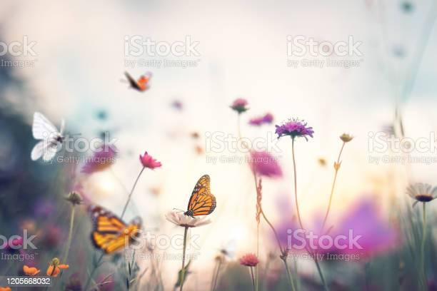 Photo of Butterflies