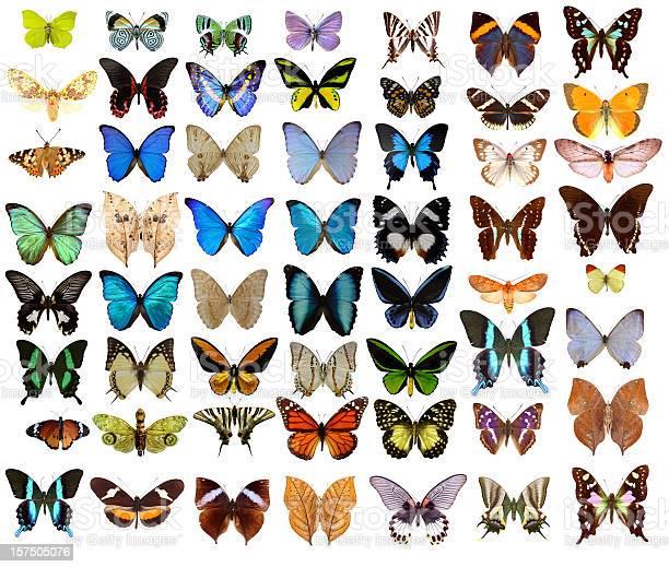 Butterflies picture id157505076?b=1&k=6&m=157505076&s=612x612&h=g6tljuevxy f403fl8obriiou4fuvkj5dd46bya9yns=