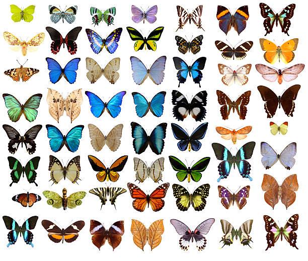Butterflies picture id157505076?b=1&k=6&m=157505076&s=612x612&w=0&h=wtdogoxclelszlbkeqj7htho4kh2xq5vhh04zblvc3i=