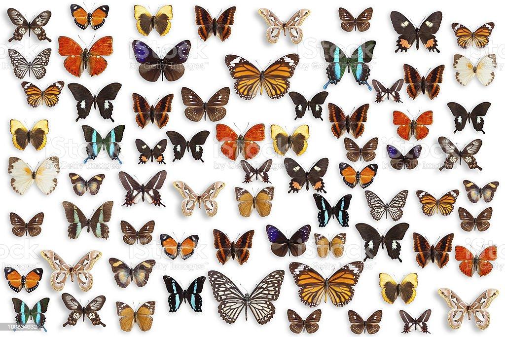 Schmetterlinge – Foto