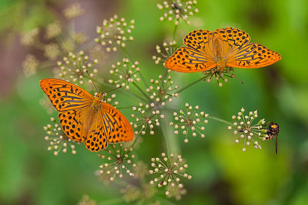 Butterflies picture id160953457?b=1&k=6&m=160953457&s=612x612&w=0&h=gace7qwjkcjz ra6vorvxs1ir9pmdr90szrdfi7c8rg=