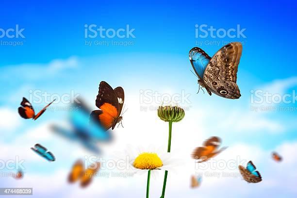 Butterflies picture id474468039?b=1&k=6&m=474468039&s=612x612&h=oous9so50q63w2lvbpdb6zmffhloab4byuofuwxj8pq=