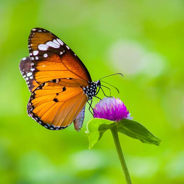 Butterflies picture id587505530?b=1&k=6&m=587505530&s=612x612&w=0&h=ryv lj7bqretotq2a2n illidcvew7gxgtvev2sitec=