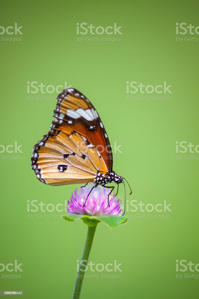 Schmetterlinge  Lizenzfreies stock-foto