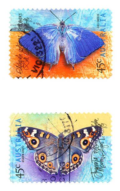 butterflies - centaurus bildbanksfoton och bilder