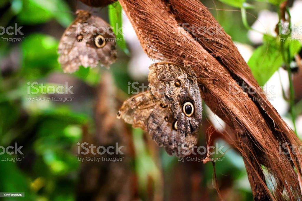 Farfalle appoggiate su un ramo nella vegetazione verde. - Foto stock royalty-free di Ala di animale