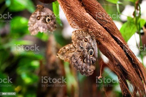 Farfalle Appoggiate Su Un Ramo Nella Vegetazione Verde - Fotografie stock e altre immagini di Ala di animale
