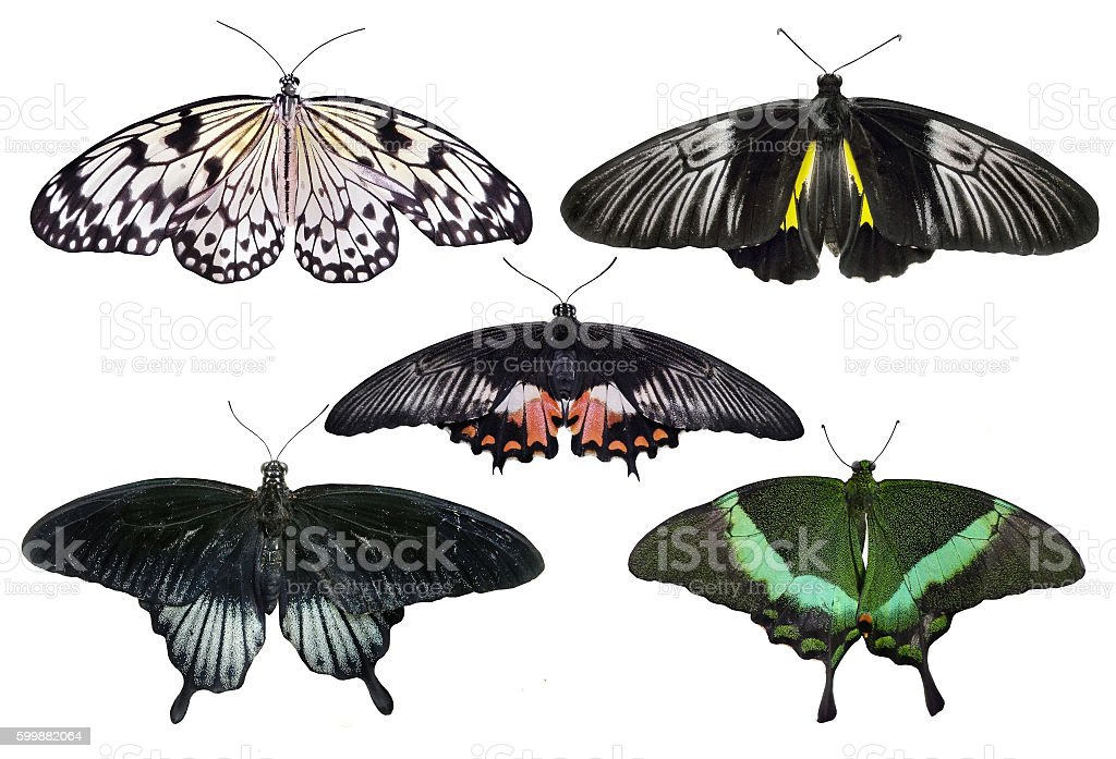 Butterflies set isolated on white stock photo