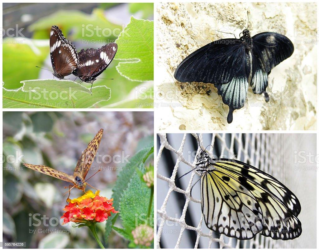 Butterflies sitting on plants set stock photo