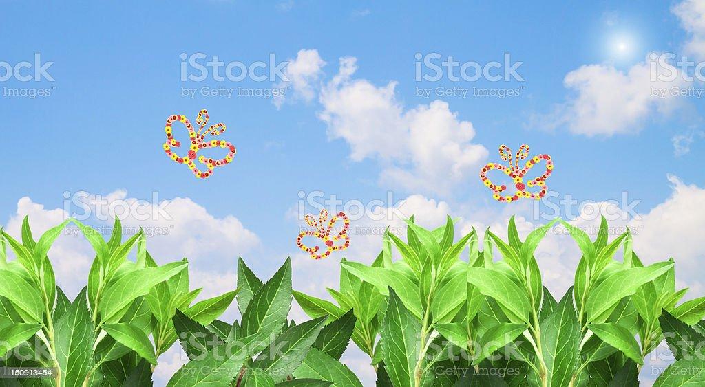 Butterflies summer blue sky royalty-free stock photo
