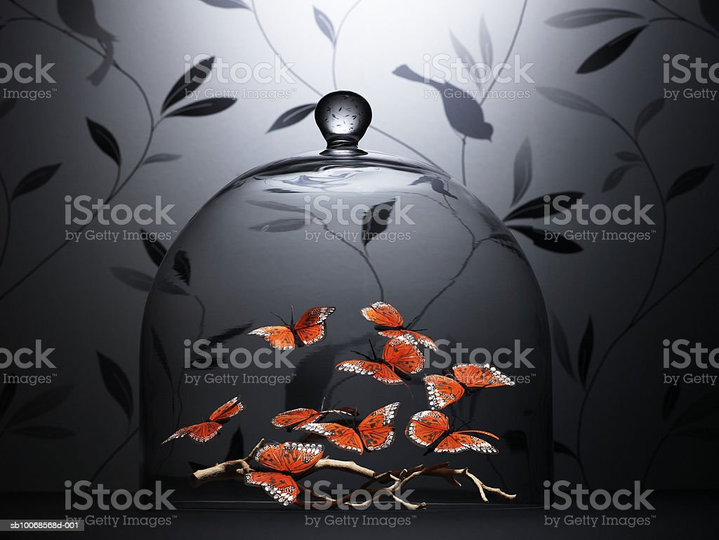 Butterflies under glass dome royalty-free stock photo