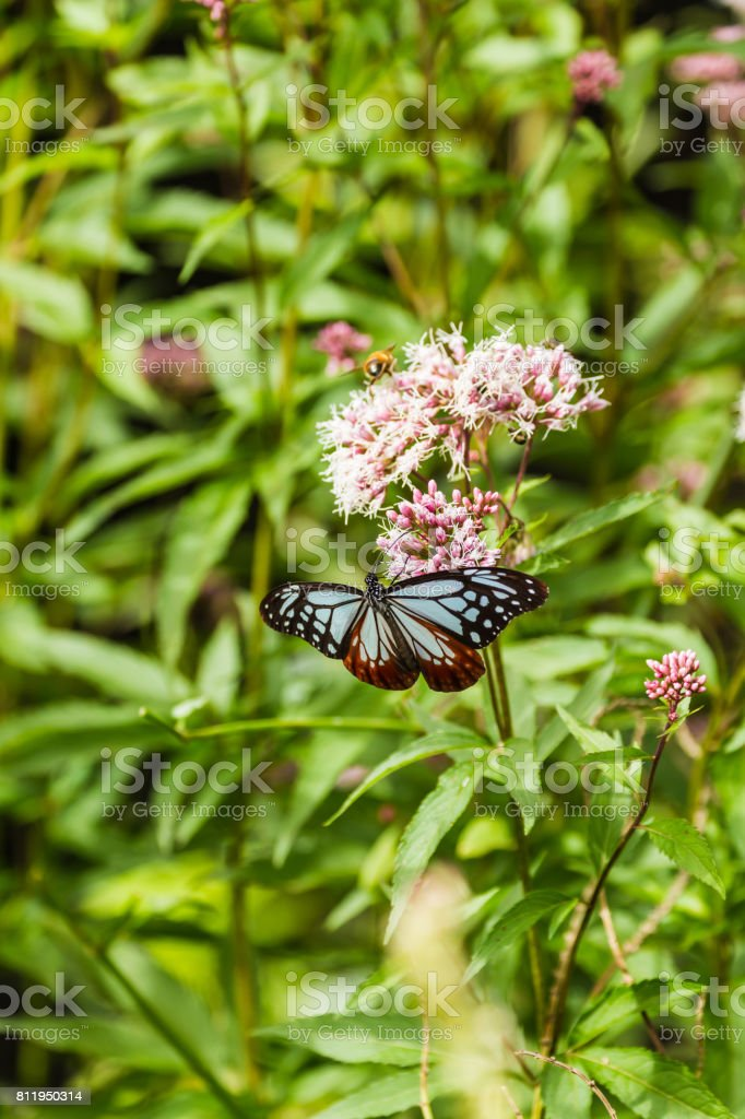 butterfly 1 stock photo