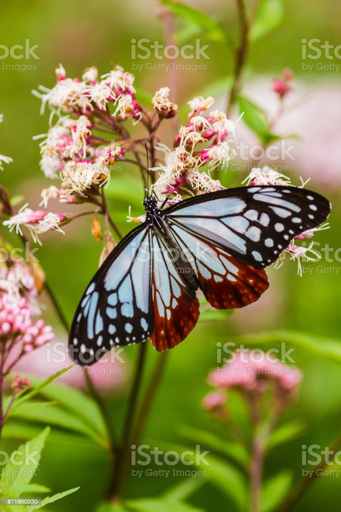butterfly 2 stock photo