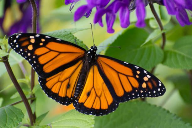 Butterfly 201954 picture id1156363005?b=1&k=6&m=1156363005&s=612x612&w=0&h=6sl15rbs7yht6kyerre2quu8zsrixfsz2wsfyirjug4=