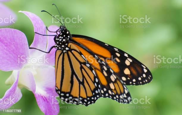 Butterfly 20198 picture id1150377793?b=1&k=6&m=1150377793&s=612x612&h=c ezthedq9patfyy2xlfftuwrh77vzzdep3kcqq5bay=