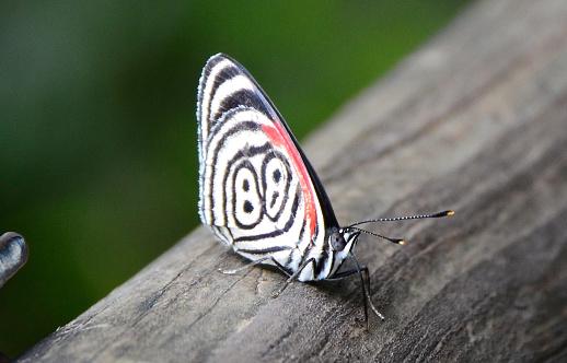 Butterfly 88 in Iguazu