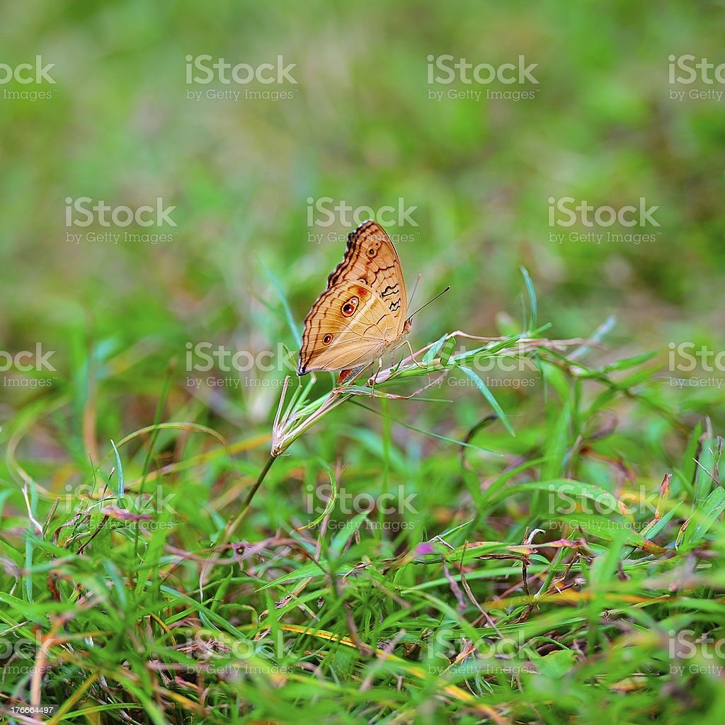 butterfly alighted on the grass royalty-free stock photo