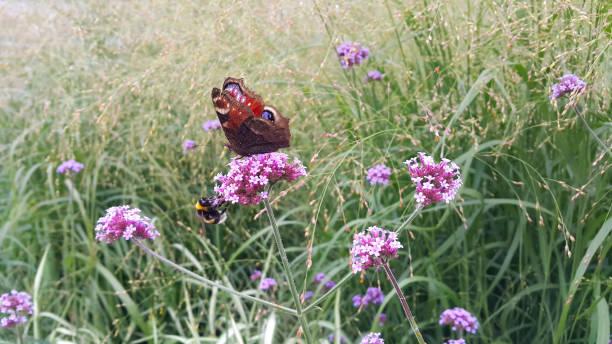 Butterfly and bee sitting on a beautiful lilac flower picture id873604338?b=1&k=6&m=873604338&s=612x612&w=0&h=eo3udwdjeprmkdbucdlxjftbdb6csct25vztajgcm u=
