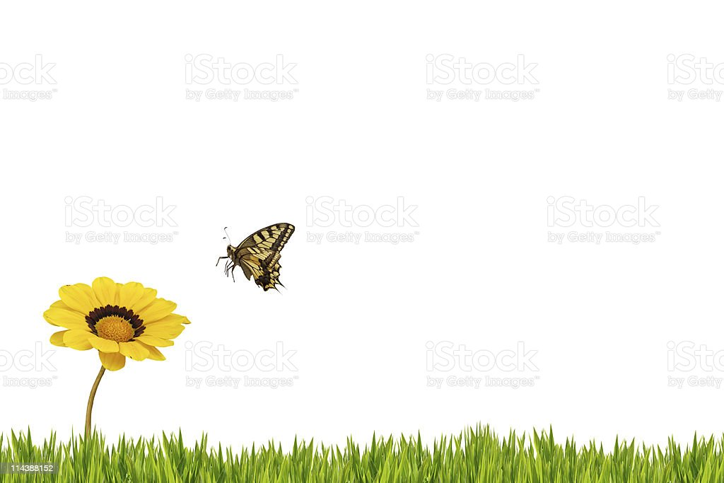 Butterfly and daisy XXXL royalty-free stock photo