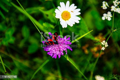 pink flower with red and black butterfly