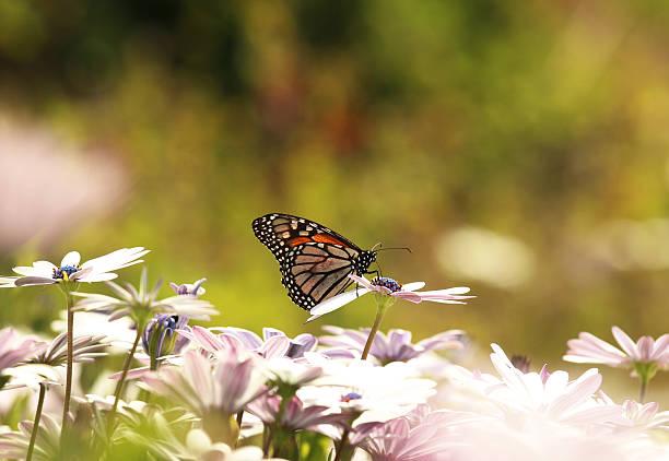 Mariposa y flores - foto de stock