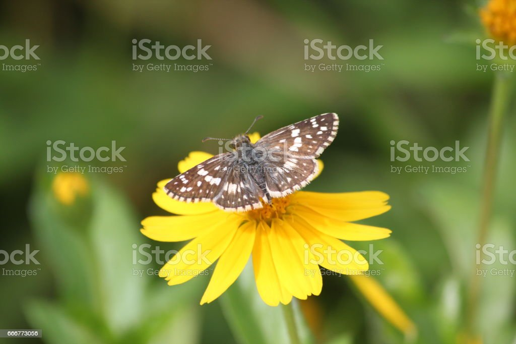 Butterfly and Flower foto stock royalty-free