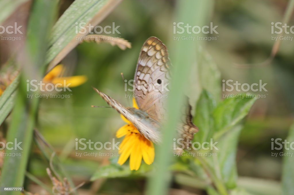 Butterfly and Flower foto de stock royalty-free