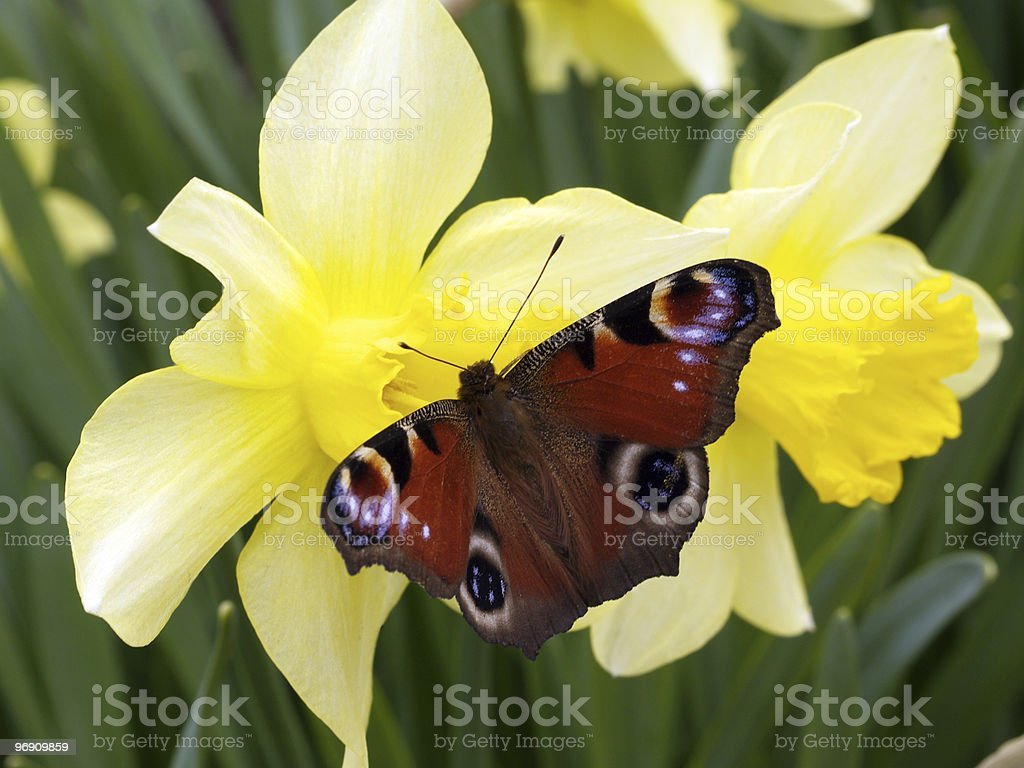 Butterfly and flowers royalty-free stock photo
