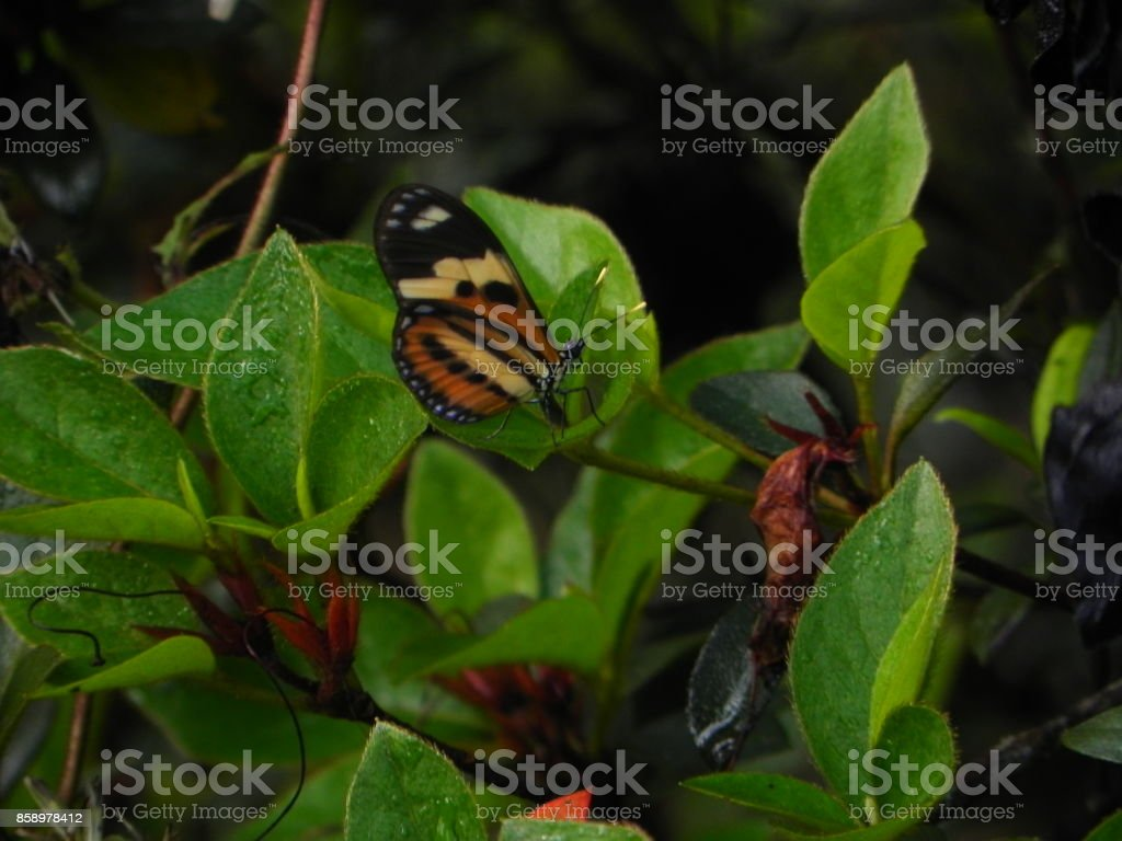 Butterfly and green foliage stock photo