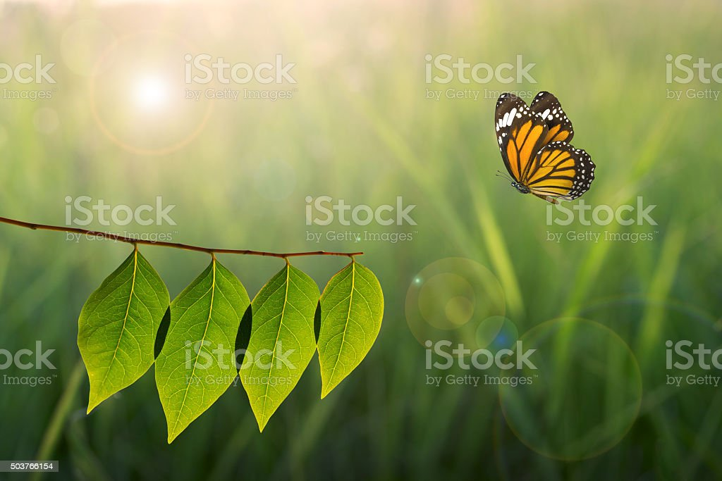 butterfly and green leaf on sunlight in nature stock photo