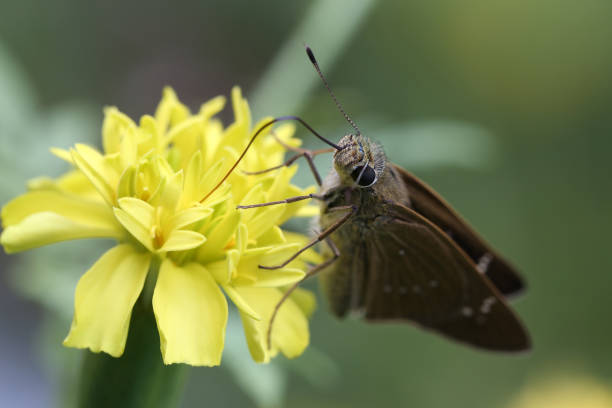 Butterfly and marigold, close up stock photo
