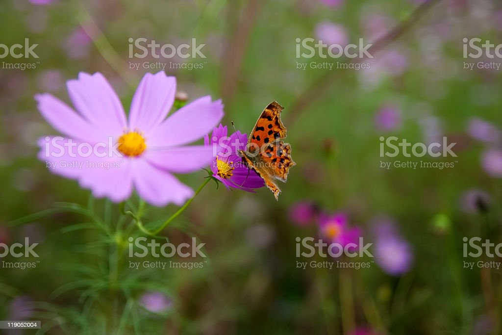 butterfly and wild flower royalty-free stock photo
