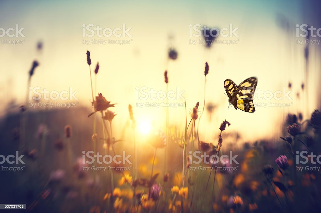 Papillon au coucher du soleil - Photo
