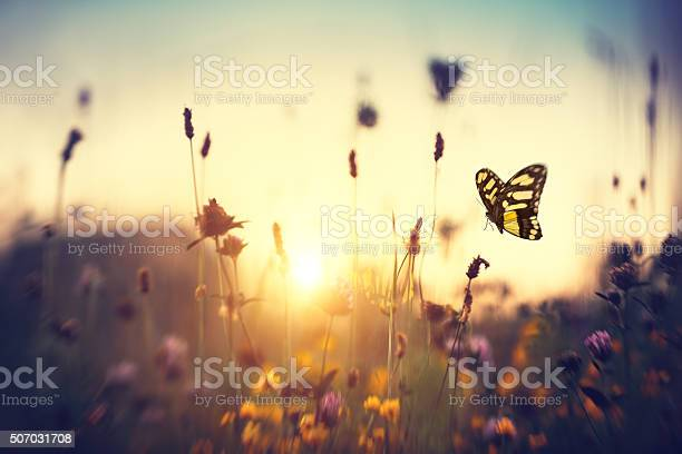 Photo of Butterfly At Sunset