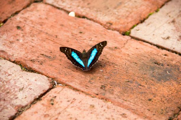 Butterfly at the floor picture id661717534?b=1&k=6&m=661717534&s=612x612&w=0&h=ar27f 4wtmp1eglc4gzp8ik2 sagaeegx74fsifyr3c=