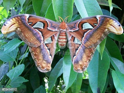 istock butterfly