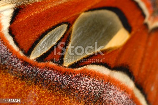 istock butterfly background 144353234