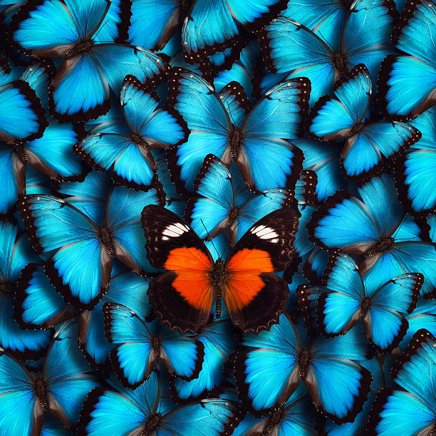 Butterfly background picture id470456049?b=1&k=6&m=470456049&s=612x612&w=0&h=tdulptuwgylpt7wlvogokgcesyv  adb3 3no5me4k0=