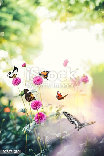 999676880 istock photo Butterfly Background 907571052